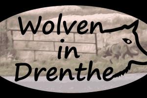 Wanneer is de wolf terug in Nederland?